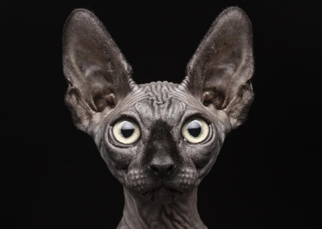 10 datos interesantes sobre gatos
