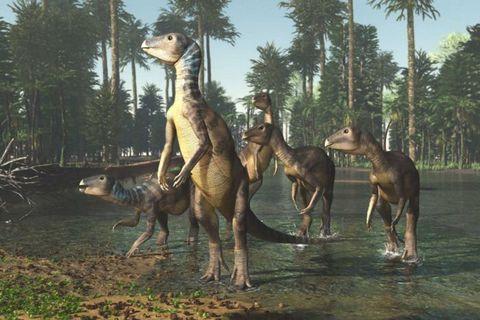 Descubren una nueva especie de dinosaurio en Australia