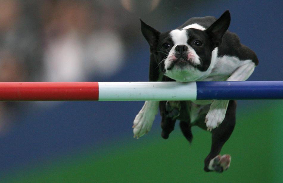 13 animales muy deportistas