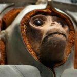 15 animales astronautas
