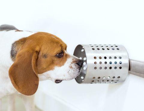 Usan perros para detectar tumores en humanos