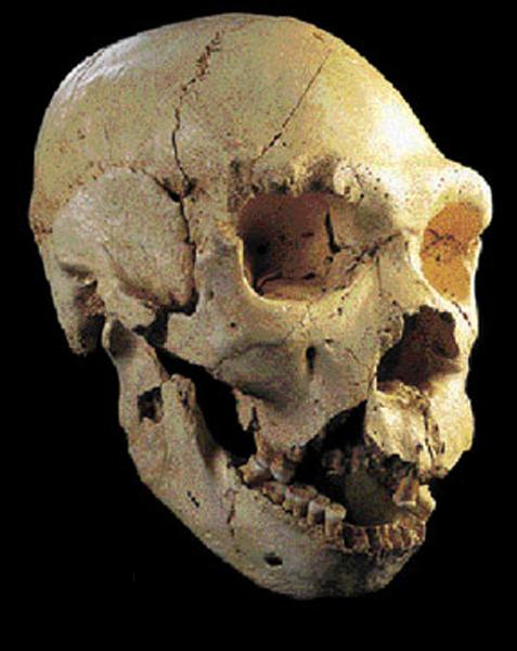 500.000 años, Homo heidelbergensis