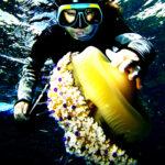 6 medusas con las que no querrás encontrarte