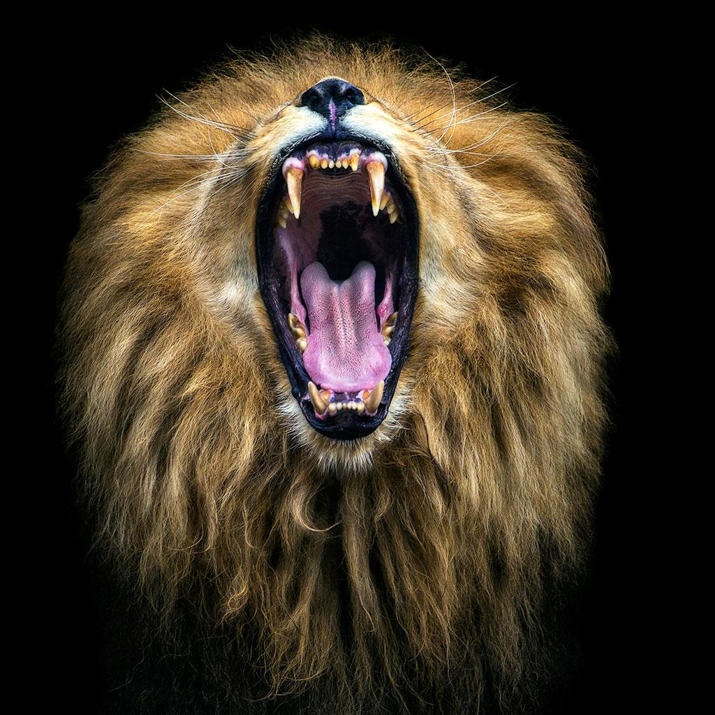7 impactantes imágenes de animales salvajes en libertad