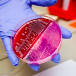 8.000 nuevas combinaciones efectivas de antibióticos