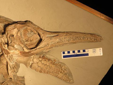 Descubren el misterio de este monstruo marino prehistórico