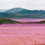 ¡Alucinante! El lugar más seco del mundo se tiñe de rosa