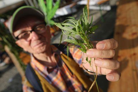 ¿Que pasaría si le dieras marihuana a tu abuelo?