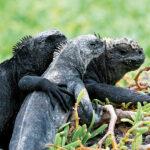 animales/ ¿Qué es eso de la fidelidad?