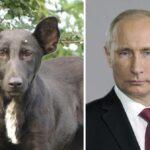 Animales que se parecen a personajes famosos