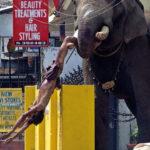 Animales con comportamientos agresivos o bizarros
