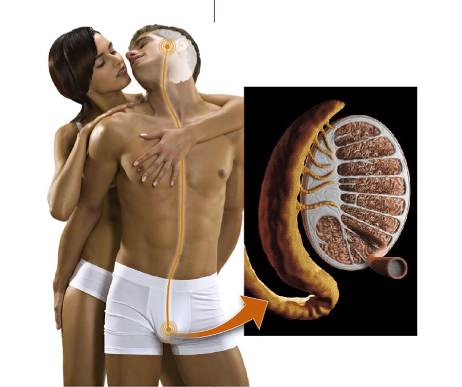 Anticonceptivos masculinos