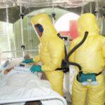 """Anticuerpos """"unicornio"""": los caballos de batalla en la lucha contra el Ébola"""