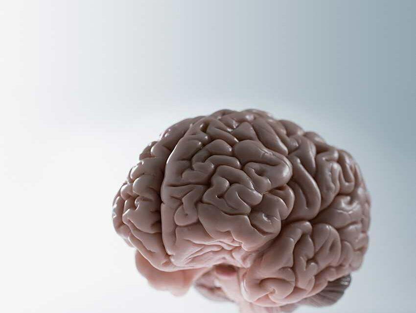 Así evoluciona nuestro cerebro