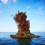 Así se crea una escultura de flores en medio del océano