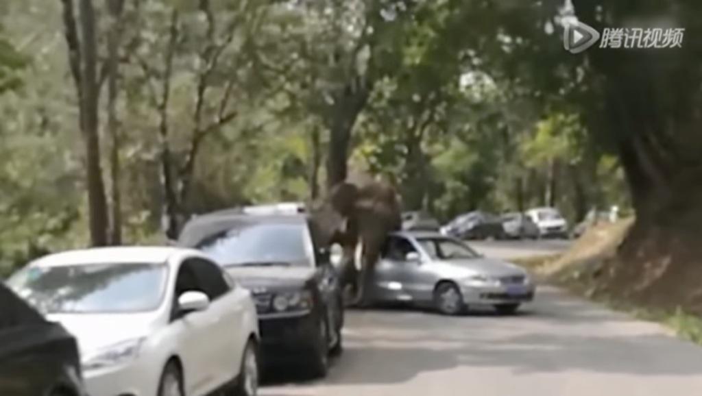 Así se desata la furia de un elefante por no ligar