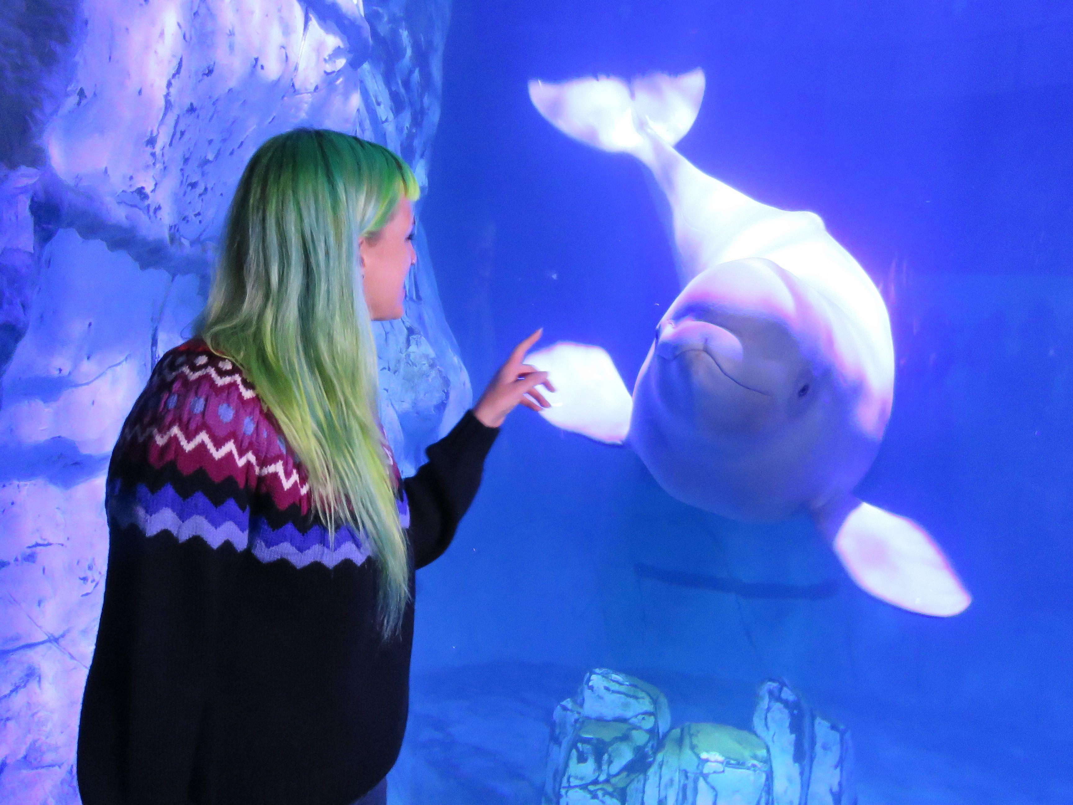 Los canarios del mar: ¿Cómo enseñan las madres beluga a conversar a sus crías?