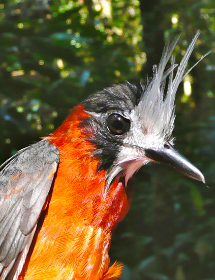 Aves pródigas