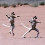 Los elefantes y los loros también bailan