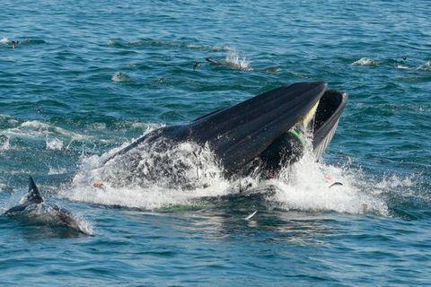 Un submarinista es atrapado por una ballena y logra sobrevivir