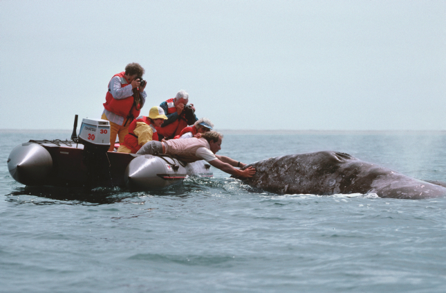 Seguir ballenas sin cazarlas