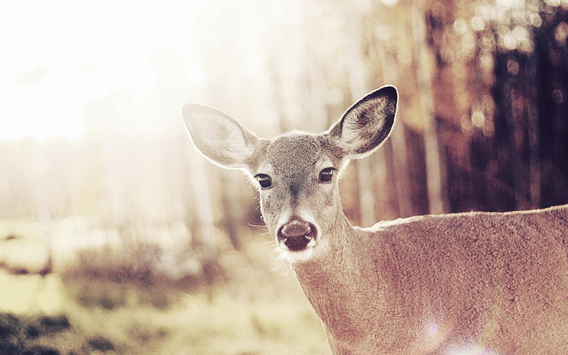 Bambi debe morir