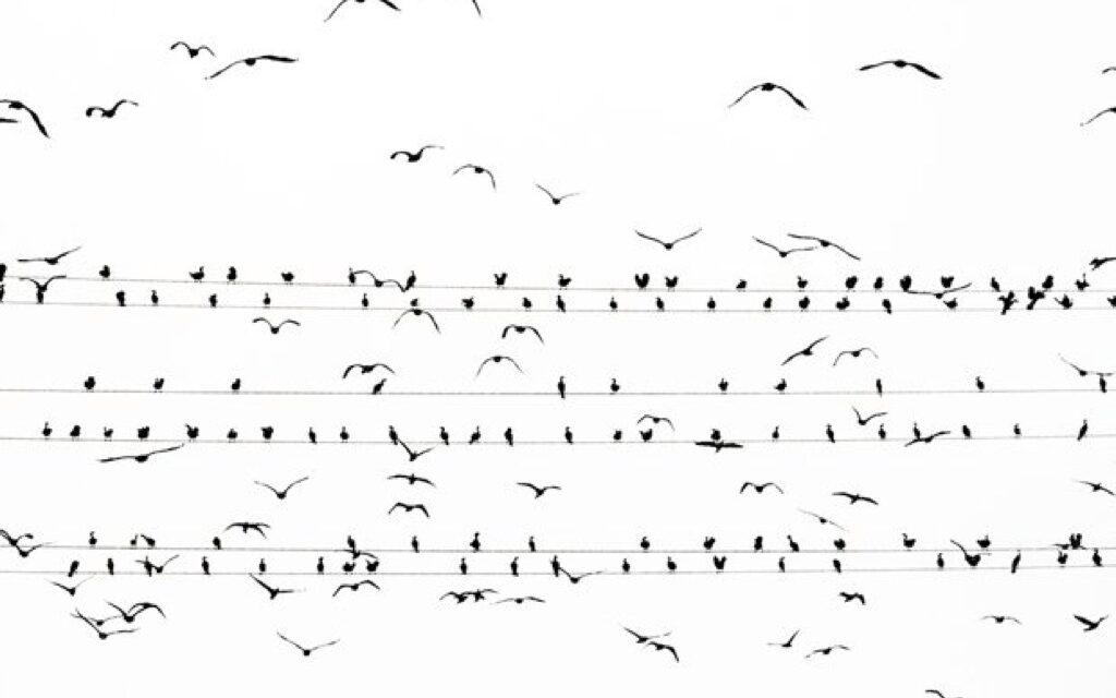 Estos pájaros no están dibujados. Son auténticos