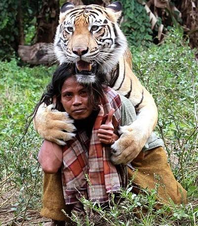 ¿Besarías a un tigre?