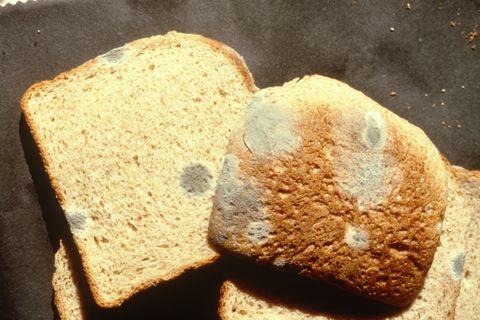 ¿Puedo comerme una rebanada de pan de molde si tiene moho?