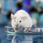 Cada vez se realizan menos experimentos y pruebas con animales
