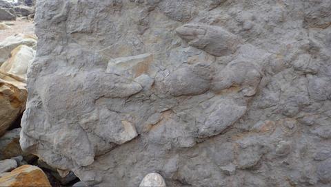 Descubren más de 80 huellas de dinosaurios