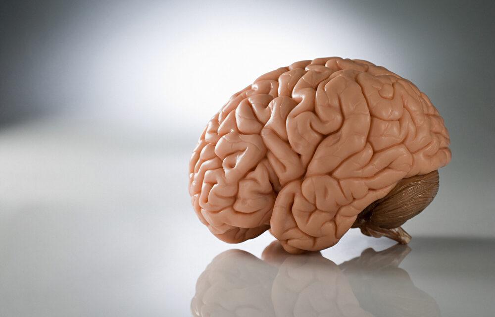 Cerebro 3D para estudiar