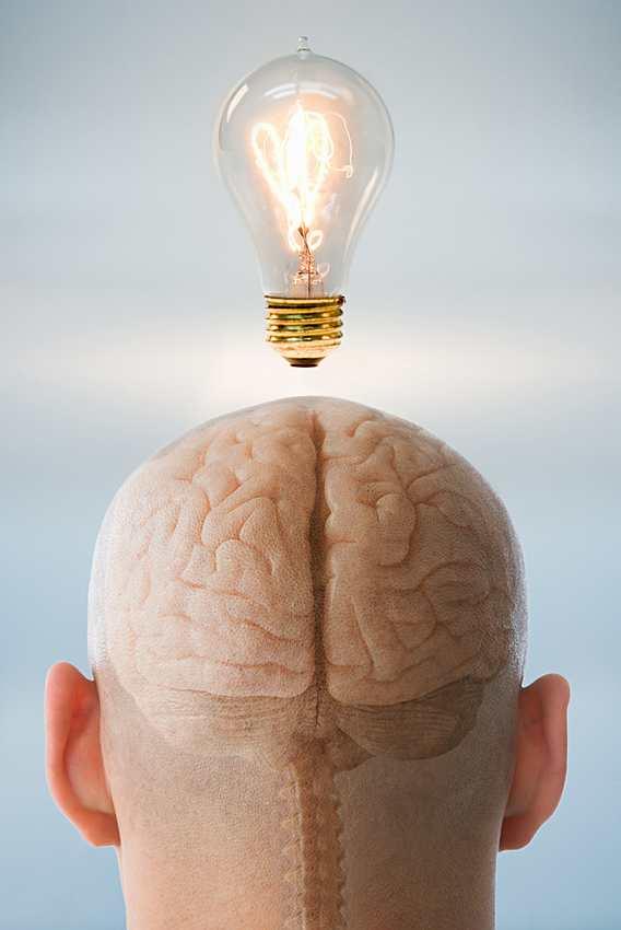 Cerebros con vida interior