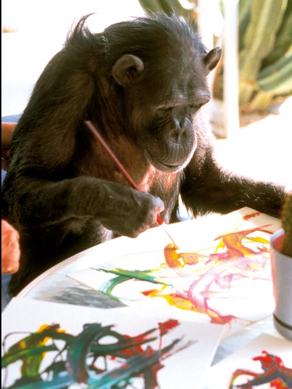 Chita y otros simios famosos