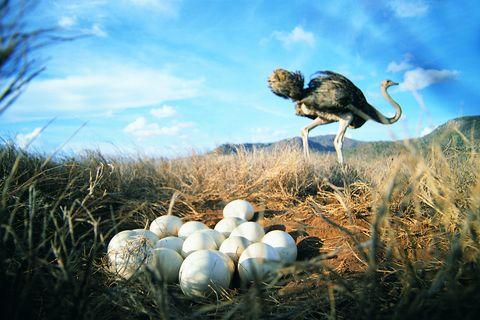 ¿Qué pájaro pone el huevo más pequeño?