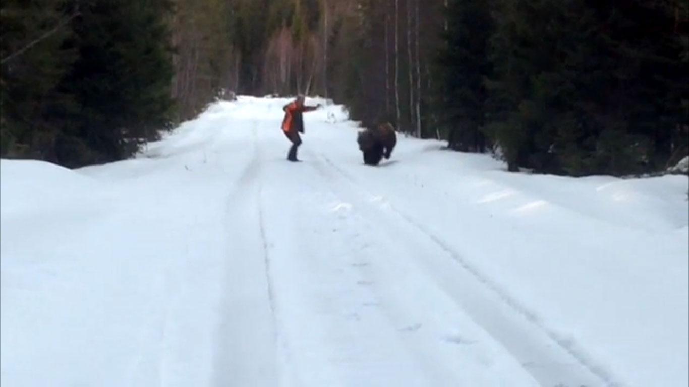 Cómo enfrentarte a un oso y salir ileso