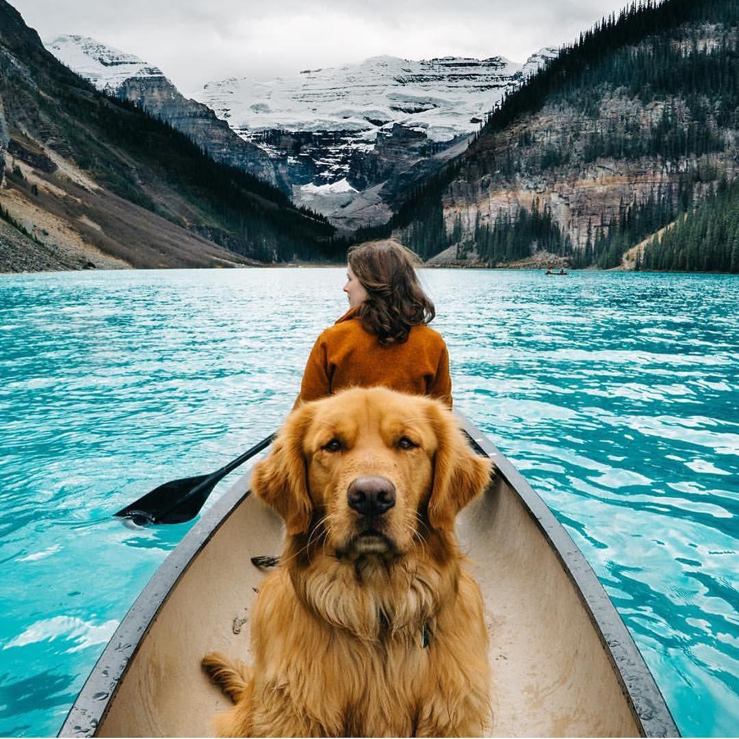 ¿Cómo ha conseguido este perro tener más amigos que tú?