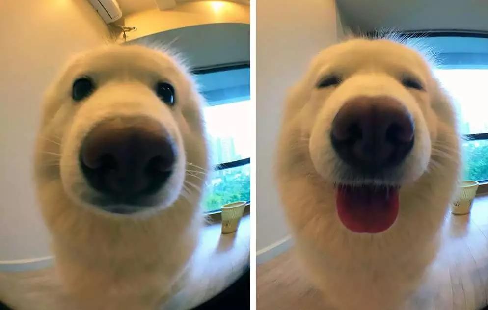 ¿Cómo reacciona tu mascota cuando le dices un piropo?