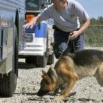 ¿Cómo saben los perros policía qué es lo que están oliendo?