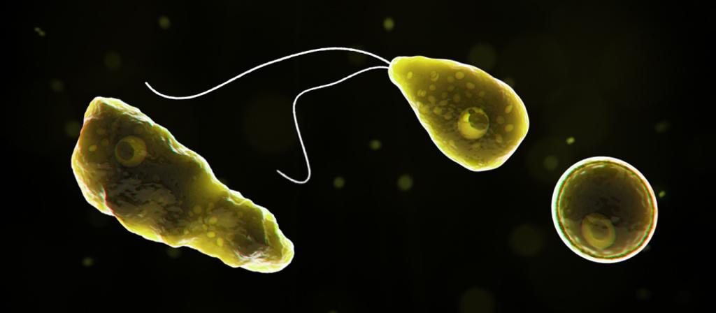 ¿Cómo se contagia la ameba devoradora de cerebros?