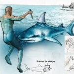 ¿Cómo defenderte de un tiburón?