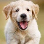 Confirman que los perros hacen lo que sea para reconfortar a sus amos