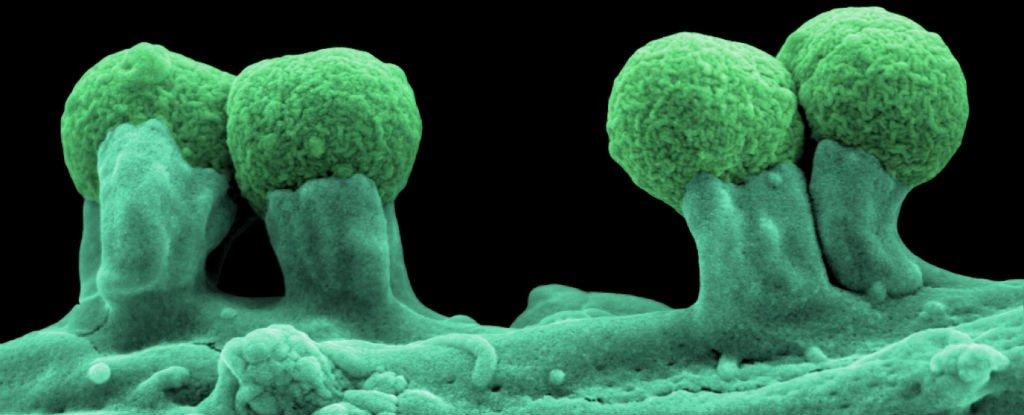 Crean la primera forma de vida semisintética