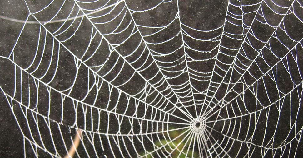 Crean la supertela de araña