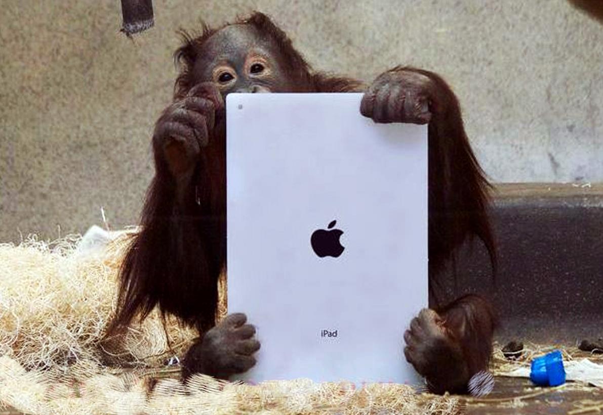 Crean un Tinder para orangutanes