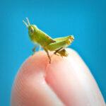 Criatura diminutas que caben en un dedo