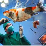 CSI: Autopsias de animales