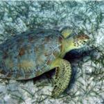 CSI para salvar a las tortugas