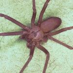 ¿Cuáles son los lugares de casa en los que hay más posibilidades de encontrar arañas?