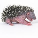 ¿Cuánto dura la infancia de los animales?
